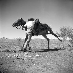 Sidney Nolan 'Untitled (Brian the stockman mounting dead horse)' 1952 archival inkjet print cm x cm Photography Degree, History Of Photography, Animal Photography, Sidney Nolan, Victoria Art, Melbourne Art, Gallery Website, Rocky Horror Picture Show, Australian Artists