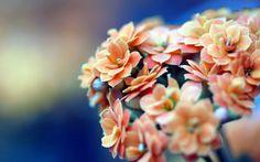 природа коричневый цвет картинки фото: 16 тыс изображений найдено в Яндекс.Картинках