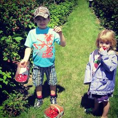 Blueberry Pancake Festival on till 3pm today & fresh berries ripe for the picking @BarrieHillFarms #visitbarrie #pickyourown #barrie #getoutandplay tourismbarrie's photo on Instagram