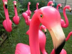 Lawn Flamingos - This flock isn't shocked, we have the best teachers on the block! Put each teacher's name on a tag around the flamingo's neck. Plastic Pink Flamingos, Pink Plastic, Yard Flamingos, Wonderland Party, Alice In Wonderland, Kitsch, Don Featherstone, Pink Bird, Mad Hatter Tea