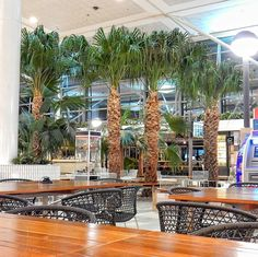 Is it a beach? Is it a forest? Nope its Brisbane international airport where we have spent a serious amount of time drinking coffee... #LoveTheWorld #beautifuldestinations #aroundtheworld #photomafia #passionpassport #mytinyatlas #thehappynow #wanderlust #travel #offthebeatentrack #travelblogger #liveauthentic #quirky #bbctravel #cntraveler #lovegreatbritain #travel #traveler