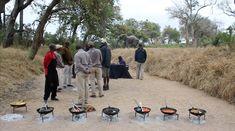 Bush Breakfast With Elephants - Tintswalo Safari Lodge Herd Of Elephants, How To Cook Eggs, Good Mood, All Over The World, Family Travel, Safari, Breakfast, Luxury, Photos
