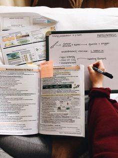 School Organization Notes, Study Organization, School Notes, College Notes, University Organization, Studyblr, Lerntyp Test, E Learning, School Study Tips
