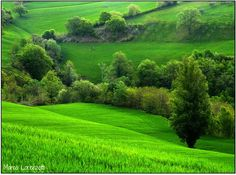 Our region has much more than 31 shades of green, would be enough traveling through the countryside and the hills or along the coast during the spring