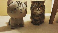 Cute Baby Cats, Cute Little Animals, Cute Babies, Funny Cats, Funny Animals, Baby Lulu, Cute Cows, Cat Memes, Lion Sculpture