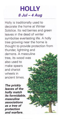 "Sacred celtic trees Holly | The Greenman essence of Holly can help with any negative emotions because it possesses a ""power of peace."""