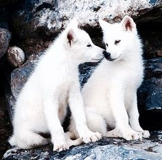 Wolf pups - SAVE THE WOLVES