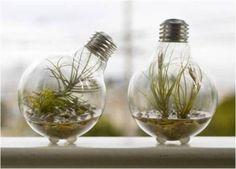 Trouxe aqui algumas ideias para o descarte de lâmpadas queimadas,que podem se  tornar lindos objetos de decoração.Precisa ter muito cuidado...