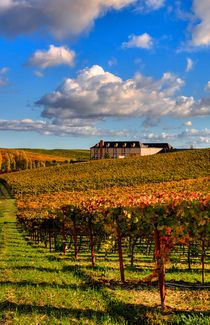 Domaine Carneros vineyards and winery in Sonoma, Napa Valley, Noerthern California USA.