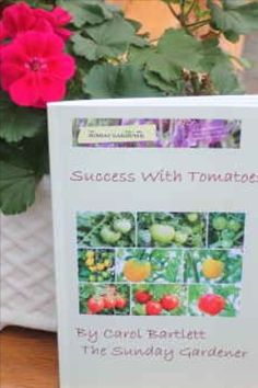 Buy The Sunday Gardener's great guide to growing tomatoes filled with practical advice, photographs and key growing points Growing Tomatoes, Growing Vegetables, Summer Flowers, Yellow Flowers, Types Of Tulips, Mushroom Compost, Parrot Tulips, Grow Bags, Growing Seeds