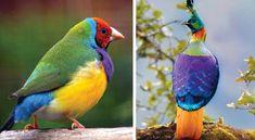 13 des plus beaux oiseaux du monde dont le plumage est une explosion de couleurs Ara Hyacinthe, Plumage, Dame Nature, Parrot, Animals, Colors Of The World, Beautiful Birds, Parrot Bird, Animales