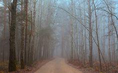 Original Landscape Photography by Vitaliy Lischinskiy Foggy Forest, Forest Road, Color Photography, Landscape Photography, Photo Canvas, Canvas Art, Photorealism, Photo Colour, Buy Art