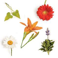 Top 5 Bargain Blooms - Gerbera Daisy, Salvia, Shasta Daisy, Sweet Potato Vine, Day Lily - Southern Living