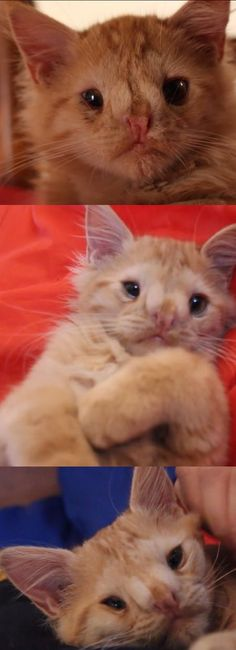 "People Said This Kitty Was ""Too Ugly To Be Loved"" But Watch This Video To See How Adorable She Is (VIDEO) #cat #cats #kitty #kittens #pets"