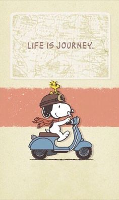 Snoopy and Woodstock Snoopy Images, Snoopy Pictures, Peanuts Cartoon, Peanuts Snoopy, Walt Disney, Wallpaper Bonitos, Charlie Brown Y Snoopy, Snoopy Comics, Snoopy Wallpaper