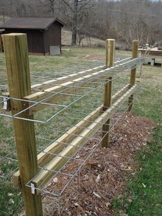 Raspberry or other cane fruit trellis made with sections of hog panels.