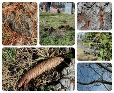 Nature Study: Taking Advantage of Nice Days in Winter