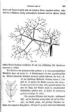 Botanische Unterhaltungen zum Verständniß der heimathlichen Flora (1858)