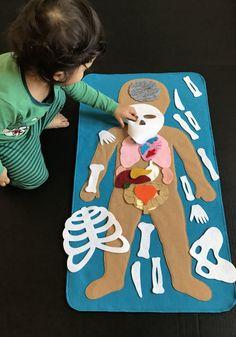Descubra el interior del cuerpo humano con este sistema de la anatomía del tablero del fieltro.  Explore los diferentes órganos y cómo se unen para crear un sistema de órganos.  Este conjunto de fieltro será una gran adición a sus otros conjuntos de salón de clases.  Una manera divertida de enseñar a los niños pequeños sobre la anatomía humana.  Hecho con fieltro de lana.  El niño pequeño es cerca de 26 de largo  * en mis años de experiencia enseñando a los niños pequeños, este tema ha sido…