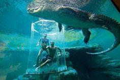 At Crocosaurus Cove Aquarium in Australia, they take you up and close to Giant crocodiles