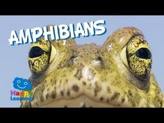 Amphibians | Educational Video for Kids - YouTube
