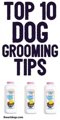 Top Ten Dog Grooming Tips