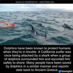 Dolphins have been known to protect humans when they're in trouble. A California surfer was once being attacked by a shark when a group of dolphins surrounded him and escorted him safely to shore. Many people have been saved by dolphins in a similar manner and reports date back to Ancient Greece. (source)