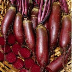 Cylindra Beet Heirloom Seeds - High Mowing Seed