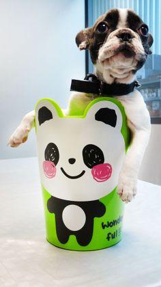 La poubelle animal