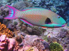 Ikan http://ruparupaikan.blogspot.com/2014/08/ikan-hias.html
