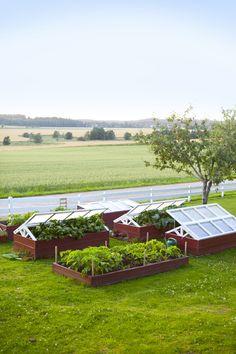 Många är ni som har hört av sig och vill veta mer om våra drivbänkar i köksträdgården. Därför ska jag nu skriva lite mer om dem. Vi valde att göra drivbänkar av många olika anledningar, dels för att det är skönt att få avgränsade ytor som är enkla att hålla rena från ogräs, dels för att ge extra bra odlingsförhållanden som kan ge grönsakerna en liten extra skjuts med rutor. Fönsterbågarna med rutor är helt nya och inte gamla fönster, som man lätt kan tro. Min man har byggt dem och det är…