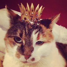 I made some cardboard tube kitty crowns!