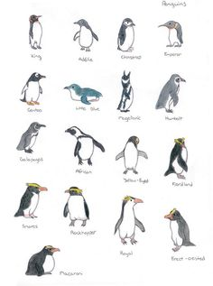 memorize different types of penguins Penguin Art, Penguin Love, Cute Penguins, Penguin Types, Penguin Parade, Pinguin Drawing, Pinguin Tattoo, Artic Animals, Cute Animals