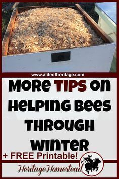 Bees in Winter: Do you have really cold, wet winters? Then consider making a candy board, moisture quilt and wrapping your hive with insulation! Honey Bee Hives, Honey Bees, Garden Bird Feeders, Garden Birds, Bee Food, Bee Friendly Plants, Bee Pictures, Bee Hive Plans, Bee Boxes
