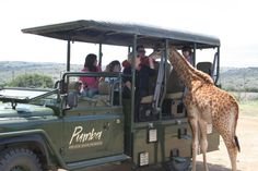 pumba game reserve - Google Search