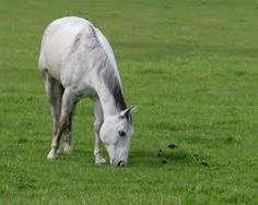 Fingerplays & Action Rhymes: Horses in the pasture