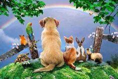 "Happy time wonder if me waiting on the other side of the Rainbow Bridge?  Yeah. . But me and is still close to full?  "" Harerukana"" tomorrow~ So there is a good thing tomorrow. . .  虹の橋の向こうには幸せな時間が待っててくれるかな? うん。。でもまだまだいっぱいそばにいてくれる?  明日は晴れるかな~  明日は良いことありますように...   [わんにゃん幸せ応援団より]"