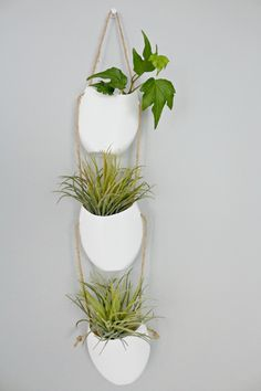hanging air plant holders
