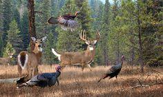 Deer Art Print - The Gathering by Whitetail Deer Artist Dale Kunkel Hirsch Wallpaper, Deer Wallpaper, Wallpaper Backgrounds, Whitetail Deer Pictures, Deer Photos, Deer Pics, Hunting Art, Turkey Hunting, Hunting Signs