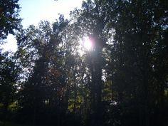 De zon die komt piepen door de bomen.