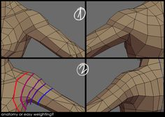 Shoulder topology. Muscle-contour (1) vs. bendy-straw (2).