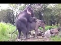 Animals Sexx Elephant Funny Compilation 2015
