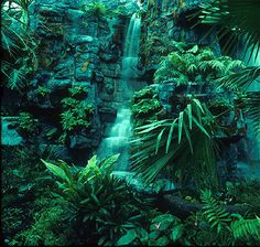 Tropical Rainforest EMERALD pantone 2013 #coloroftheyear