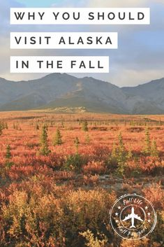 When is the best time to visit Alaska's interior? I love Alaska in the fall. The weather is great, wildlife is plentiful, and it's absolutely gorgeous! #fallinalaska #alaskainfall #alaskatravel #alaskatravelplanning #whentovisitalaska #alaska #denalinationalpark #denaliinfall #visitingalaskainfall Alaska Cruise Tips, Alaska Travel, Canada Travel, Alaska Trip, Usa Travel Guide, New Travel, Travel Usa, Travel Guides, Travel Tips