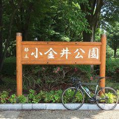 朝チャリ小金井公園まで2時間36.9km #小金井公園 #自転車 #武蔵小金井 #小金井市