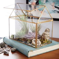 West Elm Display Box Terrariums ($59) ❤ liked on Polyvore