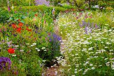 Nenáročné květy, které u nás běžně kvetou, zahradu prozáří, Foto: istock.com