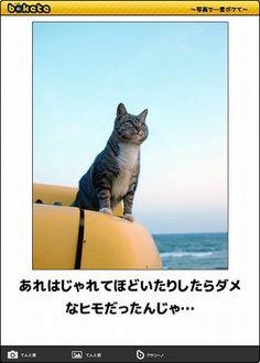 毎日入れ替わる「注目ボケ」を中心に、殿堂ボケ、人気ボケ、日別ボケランキングを毎日アップしています。毎日の息抜きに、または後日削除されることもある優秀ボケのアーカ... Animals And Pets, Funny Animals, Cute Animals, Cat Boarding, Can't Stop Laughing, Funny Moments, Neko, Make Me Smile, Funny Cats