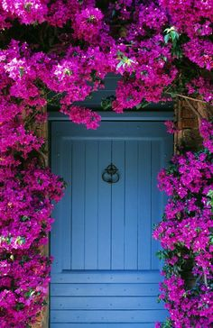 16 Fast-Growing Vines to Add to Your Yard This Season blühende Reben Bougainvillea Climbing Flowering Vines, Climbing Hydrangea, Climbing Vines, Wall Climbing Plants, Climbing Flowers Trellis, Perennial Flowering Vines, Evergreen Climbing Plants, Rock Climbing, Fast Growing Flowers