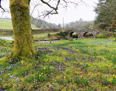 Doone Valley, Exmoor